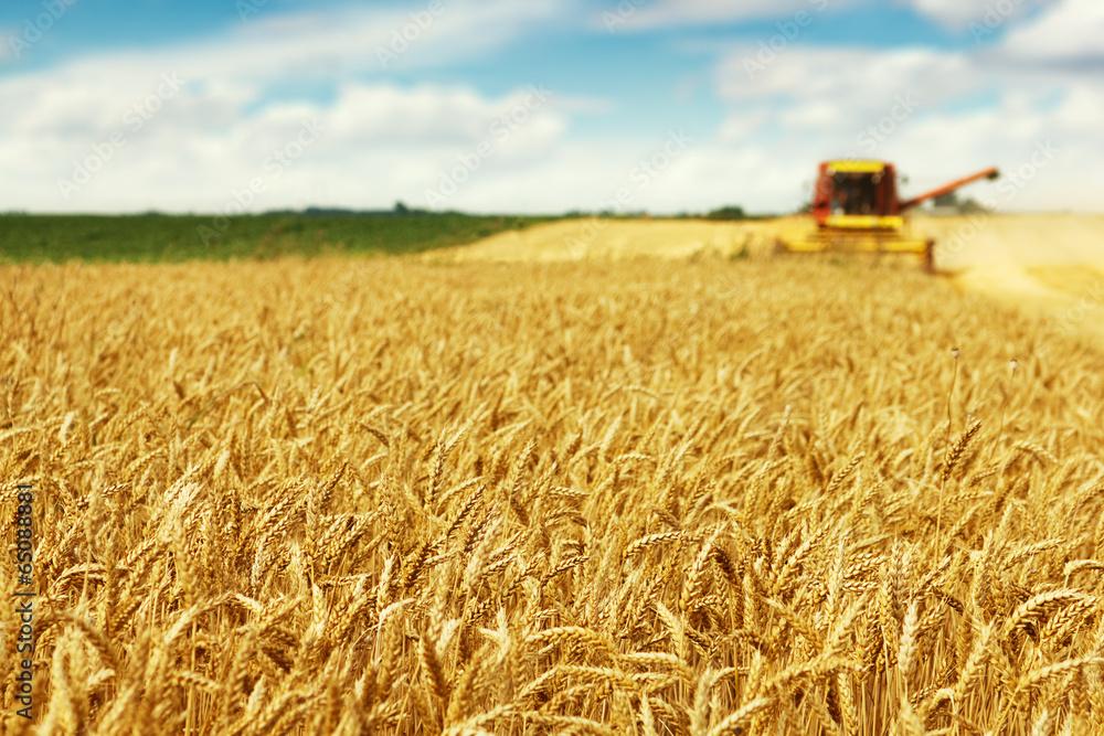 Fototapety, obrazy: Wheat harvest