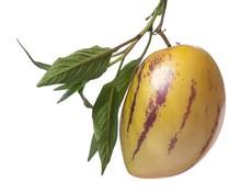 Pepino Fruit