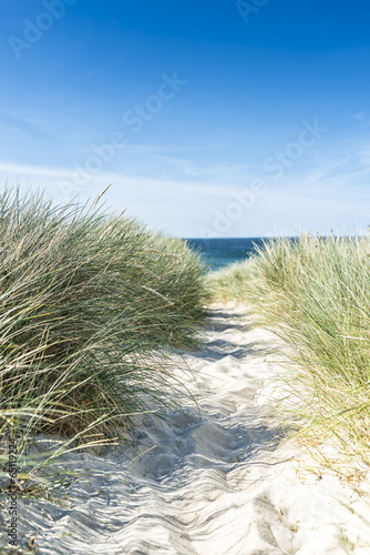 Foto  Dune with beach grass close-up.