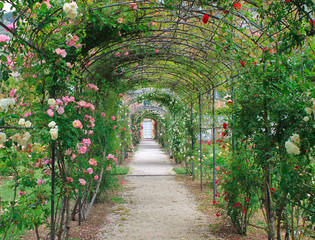 Fototapetabeautiful way made of roses