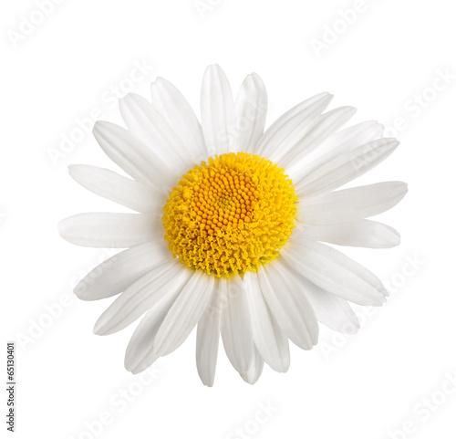 In de dag Madeliefjes White daisy
