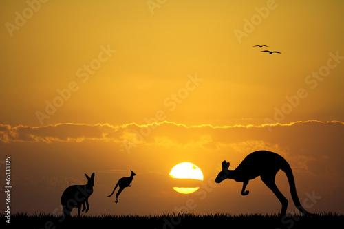 Garden Poster Brown kangaroos at sunset