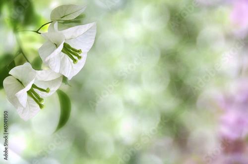 Obraz White flowers - fototapety do salonu