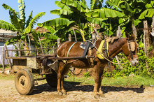 Horse Carriage On Streets Of Small Colonial Town Trinidad