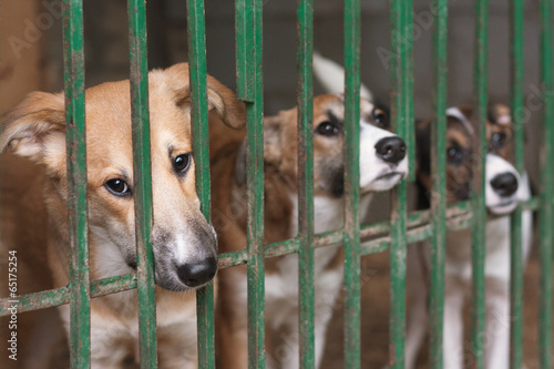 Fotografie, Obraz  Three cute puppies locked in the cage