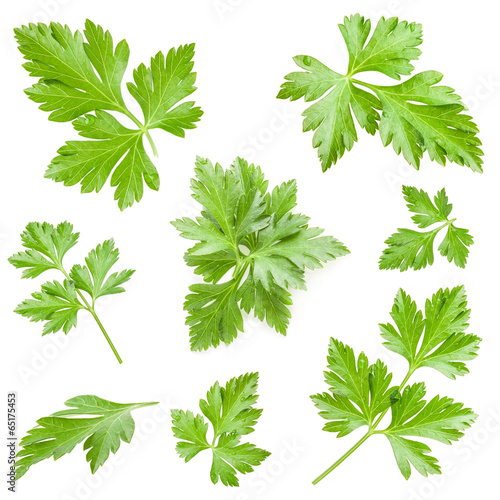 Fotografie, Obraz Parsley leaves isolated on white background, closeup