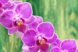 przepiękne orchidee na drewnianym tle