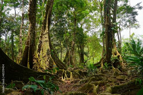 tropikalne-drzewa-i-korzenie-w-dzungli