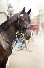 Royal Horse Guard On Duty