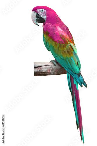 Fond de hotte en verre imprimé Perroquets colorful macaw