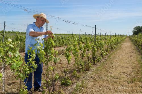 Fotografía  Man working in the vineyard