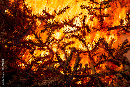 Fotografiet  Christmas tree flaming, burning