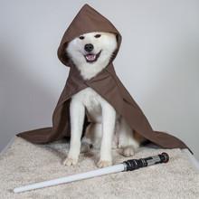 Akita Star Wars Jedi