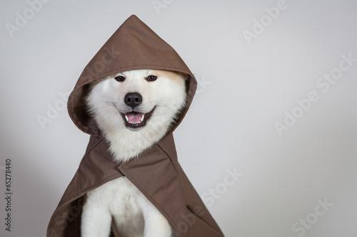 Photo Akita Star Wars Jedi