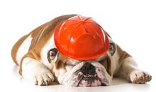 Dog Wearing Fireman Hat