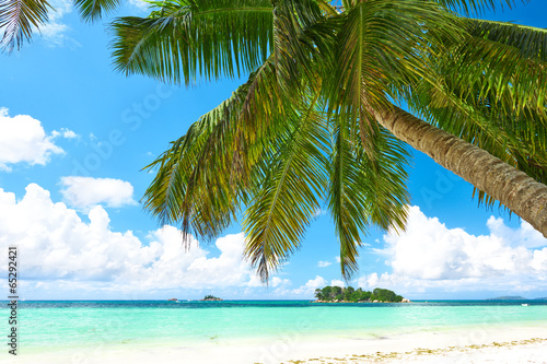 Foto op Canvas Tropical strand Beautiful beach with palm tree at Seychelles