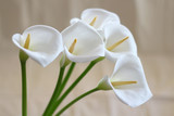 Groups of Calla flowers