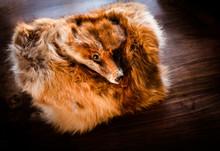 Sleeve Muff Of Fox Fur