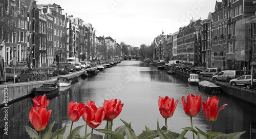 Poster Amsterdam red tulips in amsterdam