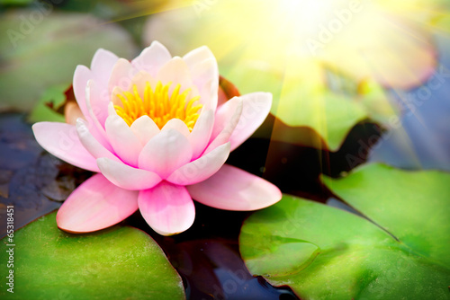 Foto op Canvas Lotusbloem Blooming floating waterlilly closeup. Lotus flower in pond