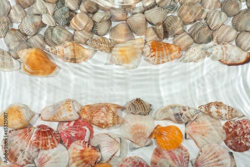 Seashells under water