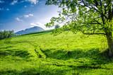 Fototapeta  - Widok na górę dzikowiec