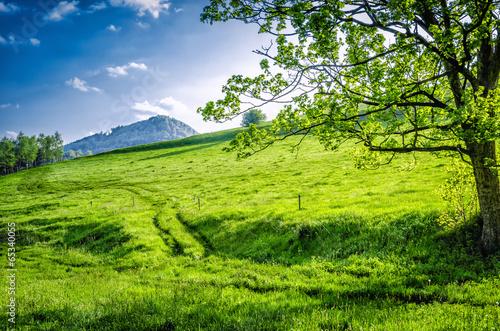 Foto op Canvas Weg in bos Widok na górę dzikowiec