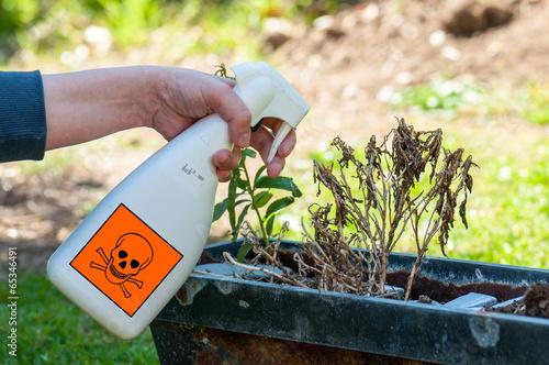 Fotografía  woman's hands spraying plants