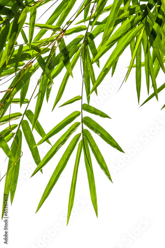In de dag Bamboo bamboo leaves isolated on white background, clipping path includ