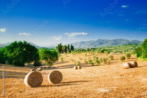 Papiers peints Toscane Tuscany landscape, summer