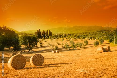 Deurstickers Toscane Tuscany landscape, summer