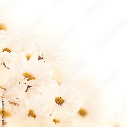 Fototapeta Spring bouquet of daisies, floral background obraz na płótnie