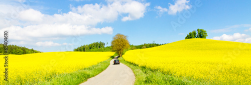 Foto op Aluminium Geel Way to the rape field