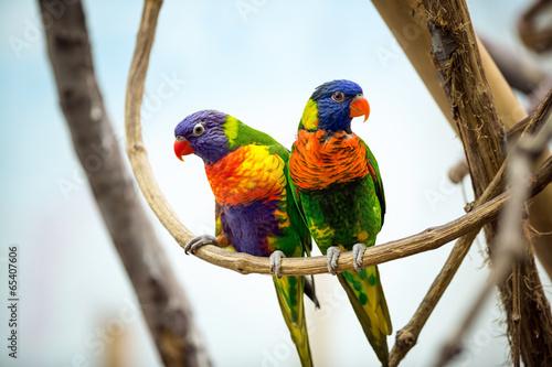 Staande foto Papegaai Parrot couple