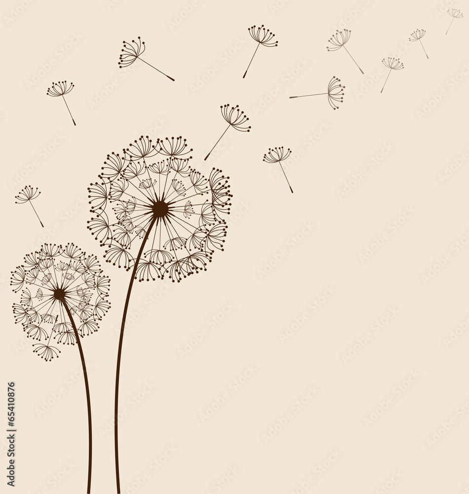 Fototapety, obrazy: Dandelions background vector