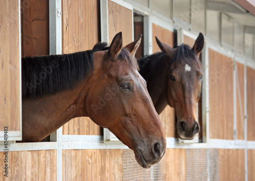 Foto op Aluminium Paarden two horses in the stable