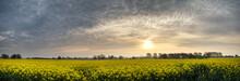Panorama Landscape Rapeseed Ca...