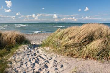 Fototapeta Weg zum Strand durch Dünen an der Ostsee bei Heiligenhafen