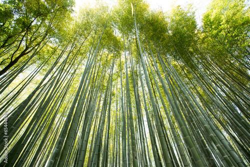 Foto op Canvas Bamboo bamboo wall, high Bamboo wall forest in Arashiyama, Kyoto, Japan