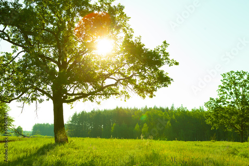 Foto op Plexiglas Weide, Moeras Summer Landscape