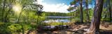 Fototapeta Las - Leśna panorama nad brzegiem jeziora