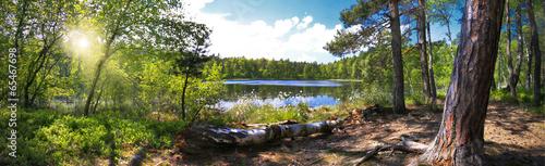 Spoed Foto op Canvas Bos Leśna panorama nad brzegiem jeziora