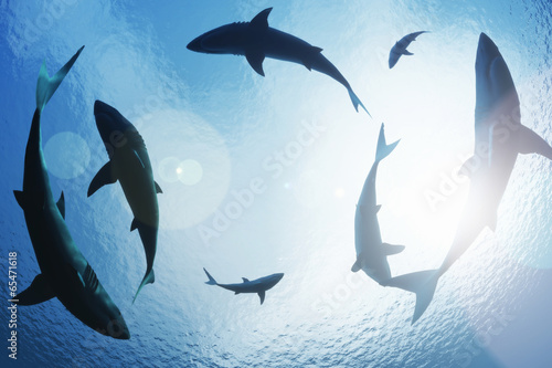 Fotografie, Obraz  School of sharks circling from above