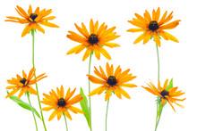 Various Flower Yellow Coneflow...
