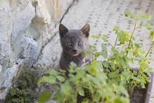 Kitten Hiding Behind The Flowe...