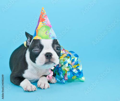 Deurstickers Franse bulldog Winking Birthday Puppy.