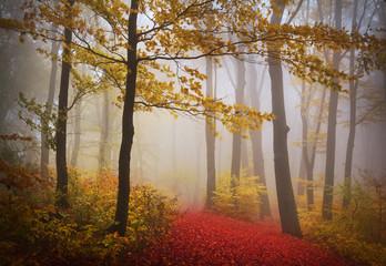 Fototapeta Las Foggy mystic forest during fall