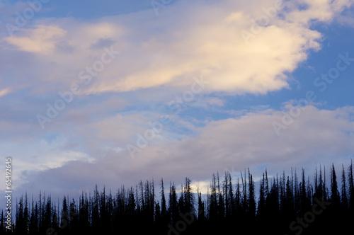 Fotobehang Natuur Park Cedar Breaks