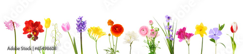 Photo  Fresh spring flowers isolated on white