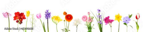 Photo  Fresh spring flowers isolated on white